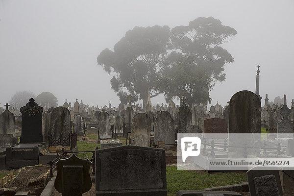 Grabsteine auf dem Friedhof in Melbourne  Victoria  Australien