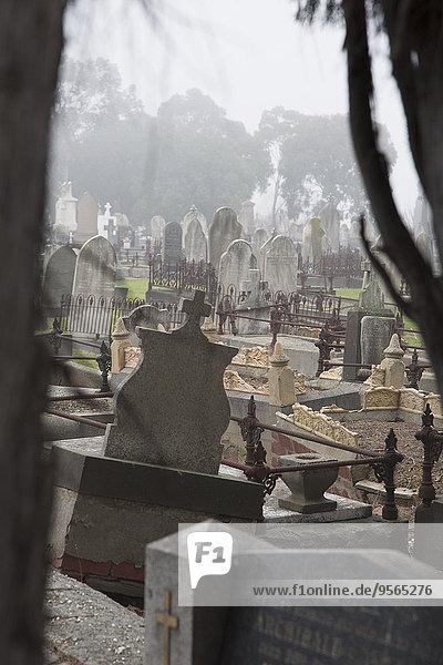 Grabsteine auf dem Friedhof  Melbourne  Victoria  Australien