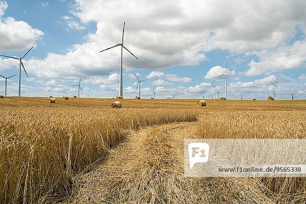Blick auf das landwirtschaftliche Feld
