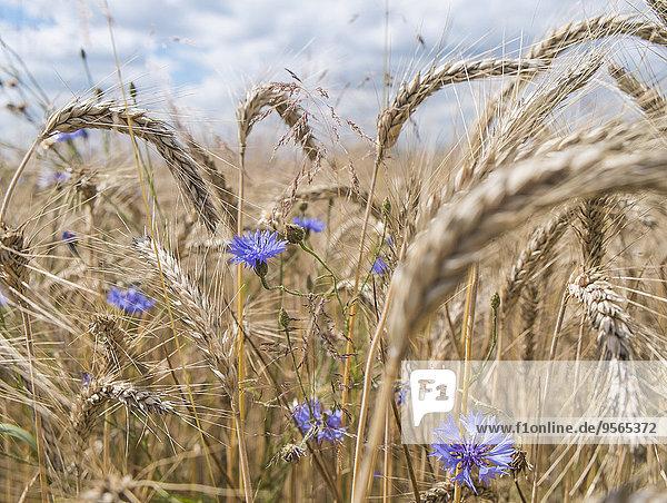 Blumen und Pflanzen auf dem Feld