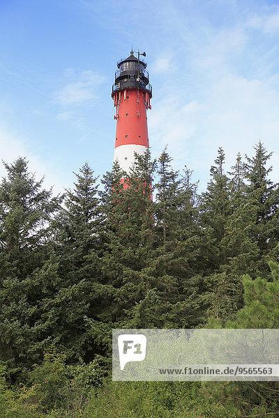 Baum,Leuchtturm