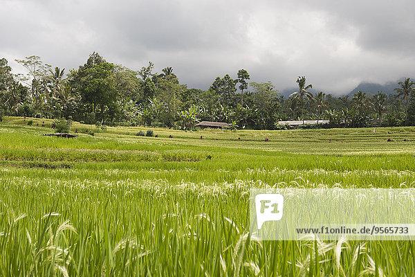 Landschaftlich schön,landschaftlich reizvoll,Wolke,Himmel,Reis,Reiskorn,Ansicht,Terrasse