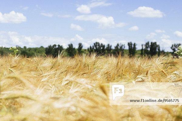 Wolke,Himmel,Landwirtschaft,Feld