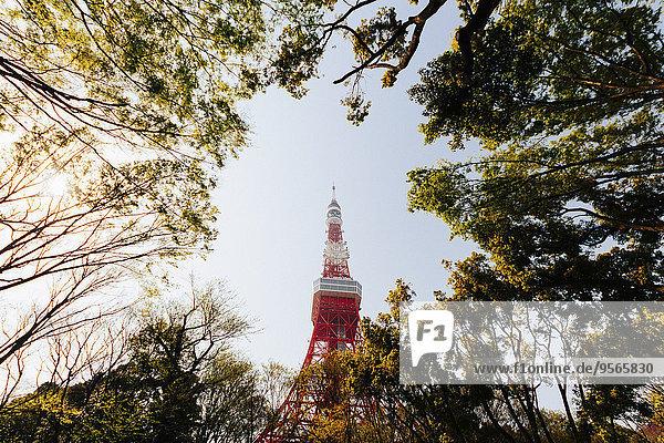 Niedriger Winkel der Bäume gegen den Tokyo Tower