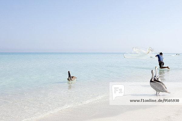 Pelikane von Fischern mit Netz auf See