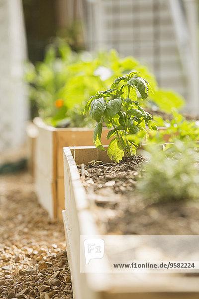 Wachstum Pflanze Garten