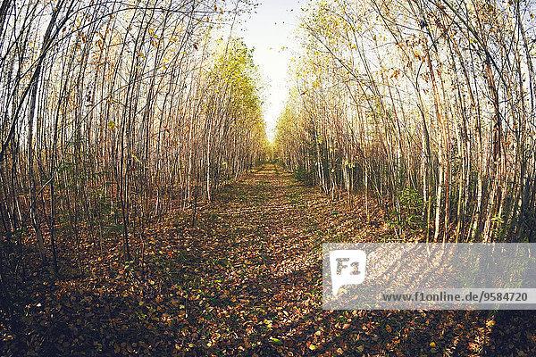 Fisheye Weg Wald Ansicht Blendenfleck lens flare
