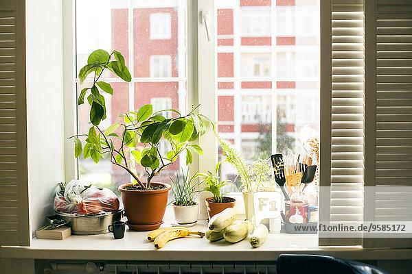 Fenster Lebensmittel Pflanze Fensterbank Topfpflanze Fenster,Lebensmittel,Pflanze,Fensterbank,Topfpflanze