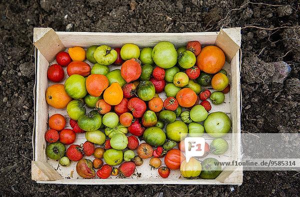 Vielfalt Close-up Tomate