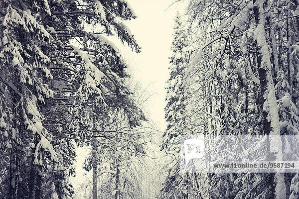 Baum Schnee Wald