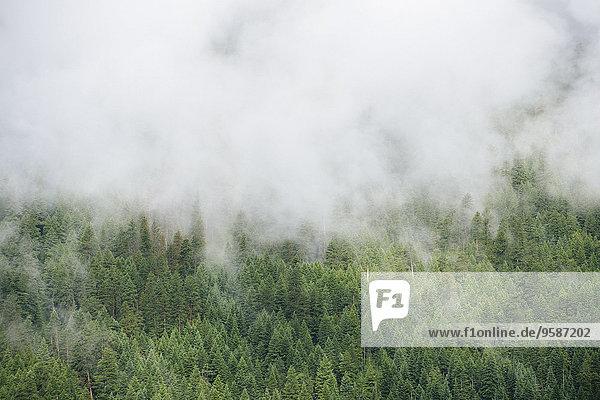 Berg über Wald Nebel immergrünes Gehölz Baumkrone