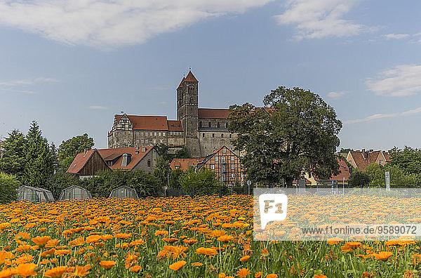 Deutschland  Sachsen-Anhalt  Quedlinburg  Abtei Quedlinburg  St. Servatiuskirche  Blumengarten