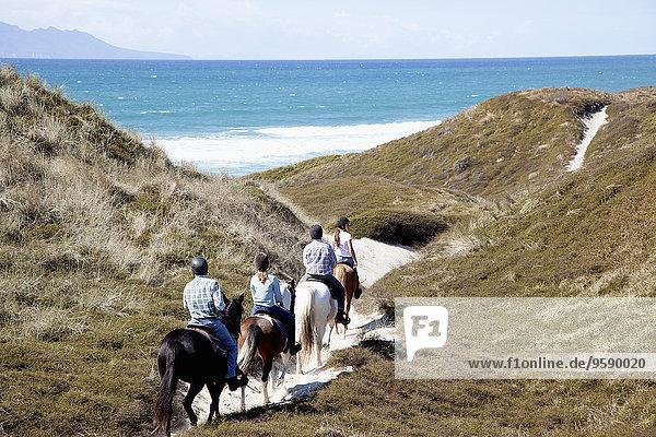 Horse riders heading down to Pakiri Beach  Auckland  New Zealand
