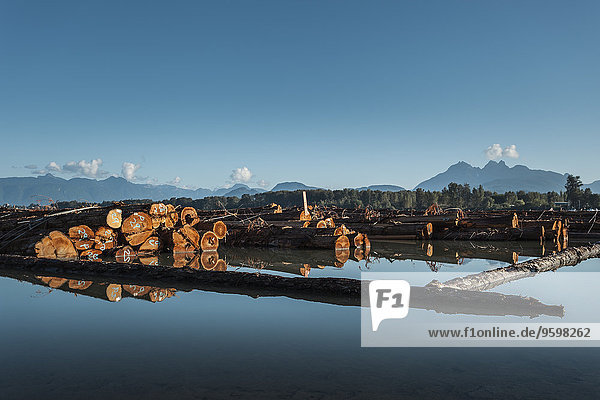 Logs floating in lake  Vancouver  British Columbia  Canada