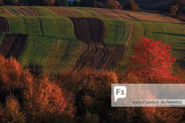 Farbaufnahme Farbe Wald Feld Herbst Luftbild Kroatien