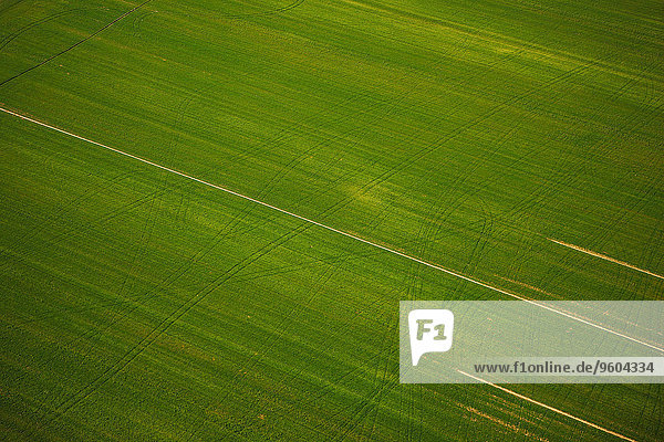 grün Feld Ansicht Luftbild Fernsehantenne Kroatien