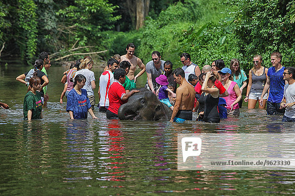 Malaysia  Pahang  Temerloh  Kuala Gandah Elephant Conservation Centre