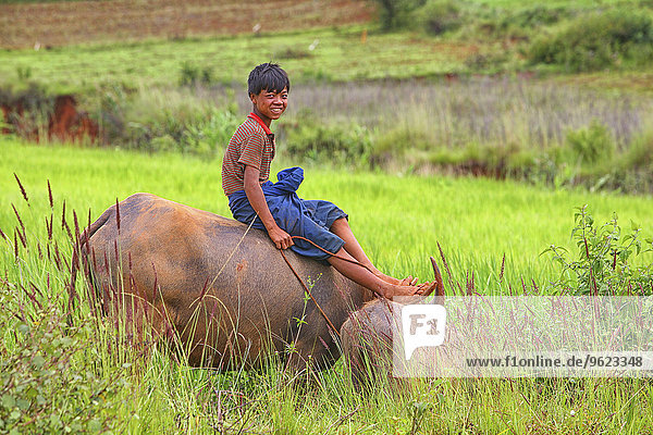 Myanmar  Kalaw  smiling teenage boy sitting on cattle