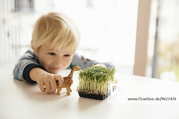 Kleiner Junge spielt mit Spielzeugdinosaurier und Kresse auf dem Tisch