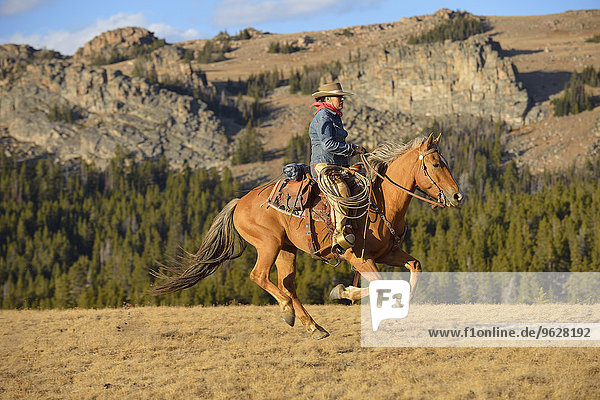 USA  Wyoming  Cowgirl-Reiten