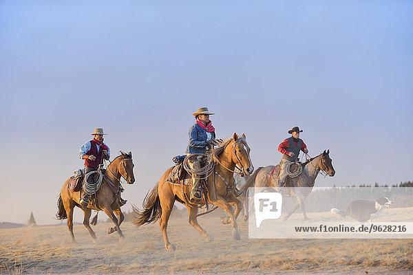 USA  Wyoming  drei reitende Cowboys und ein Hund