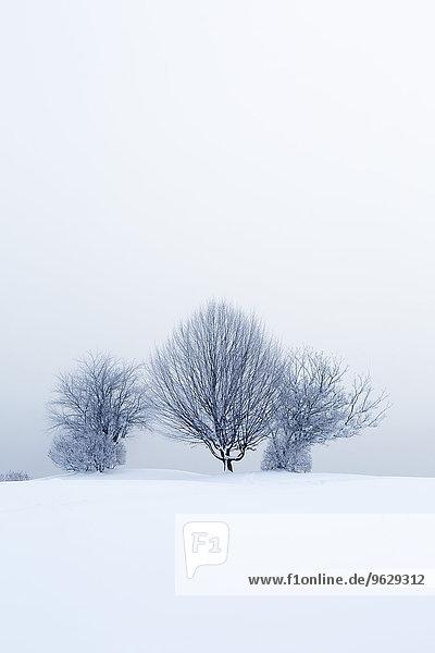 Österreich  Mondsee  verschneite Winterlandschaft