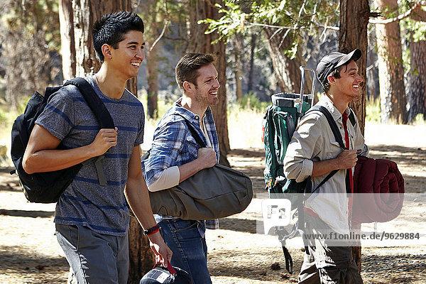 Drei junge männliche Camper gehen durch den Wald  Los Angeles  Kalifornien  USA