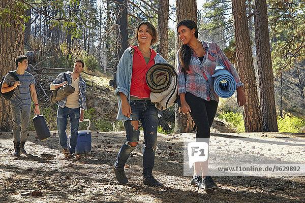 Vier junge erwachsene Freunde mit Campingausrüstung im Wald  Los Angeles  Kalifornien  USA