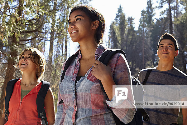 Three young adult friends hiking in forest  Los Angeles  California  USA