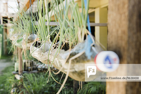 Pflanzen in Plastikflaschen hängend vom Haus  Cebu  Philippinen