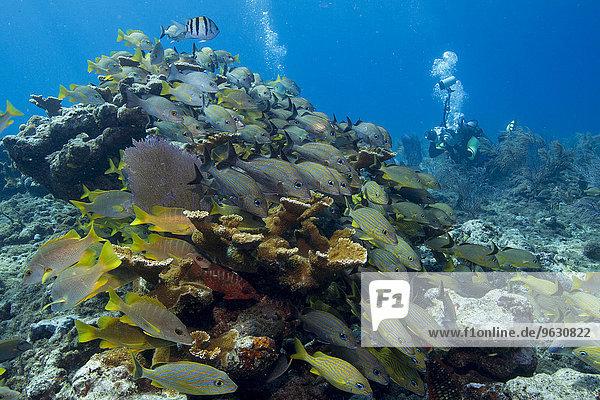 Fotograf am Korallenriff.