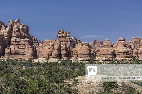 Felsformationen  Needles  Monticello  Utah  USA  Nordamerika