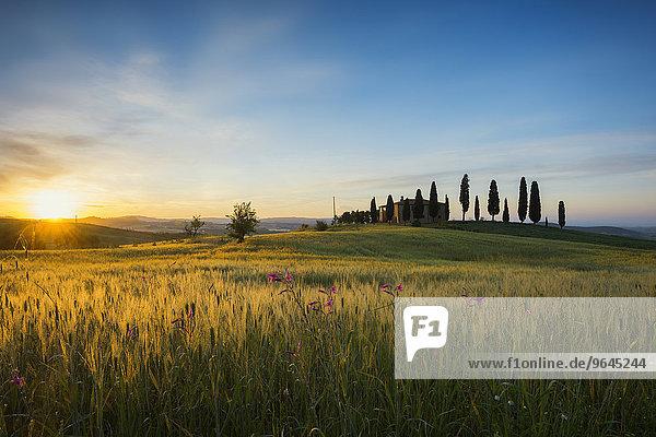 Sonnenaufgang  Landschaft mit Landhaus und Zypressen  bei Pienza  Val d'Orcia  Provinz Siena  Toskana  Italien  Europa