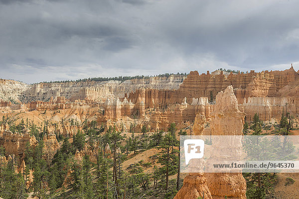 Felsszenerie vom Navajo Loop Trail  Bryce-Canyon-Nationalpark  Bryce  Utah  USA  Nordamerika
