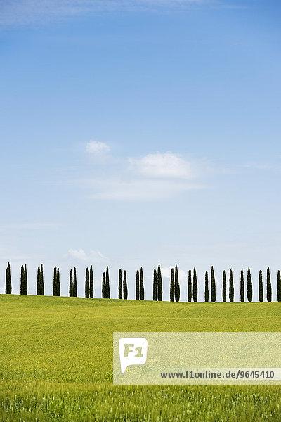 Zypressenallee  bei San Quirico d'Orcia  Val d'Orcia  Provinz Siena  Toskana  Italien  Europa