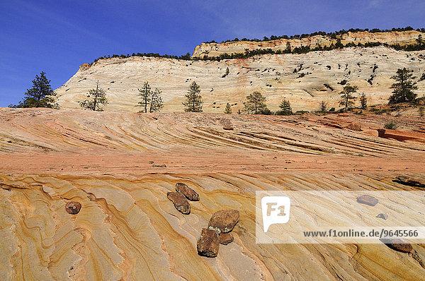 Plateau aus buntem Sandstein am Fuße der Checkerboard Mesa  Zion-Nationalpark  Utah  USA  Nordamerika
