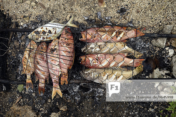 Fish are cooked over hot coals  Simeulue  Indonesia  Asia
