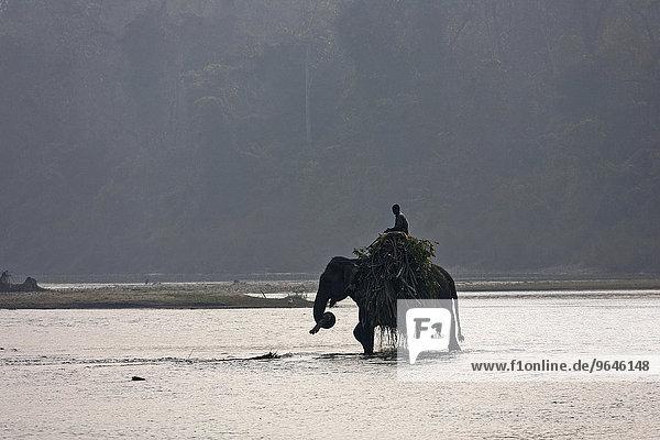 Ein Mahut durchquert mit seinem Elefant den East Rapti River  bei Sauraha  beim Chitwan- Nationalpark  Nepal  Asien