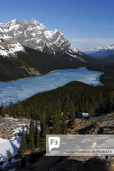 Gletschersee Peyto Lake im Frühling mit einer dünnen Eisdecke  dahinter der Gipfel des Mt. Patterson  Banff-Nationalpark  Rocky Mountains  Alberta  Kanada  Nordamerika
