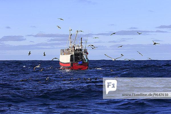 Trawler  Seevögel  Kap der Guten Hoffnung  Südafrika