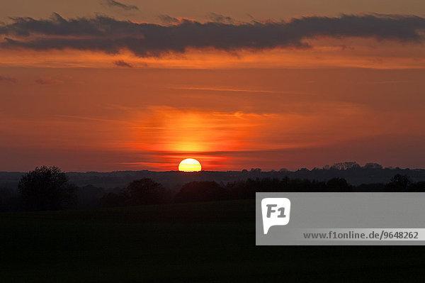 Sonnenuntergang  Mecklenburg-Vorpommern  Deutschland  Europa