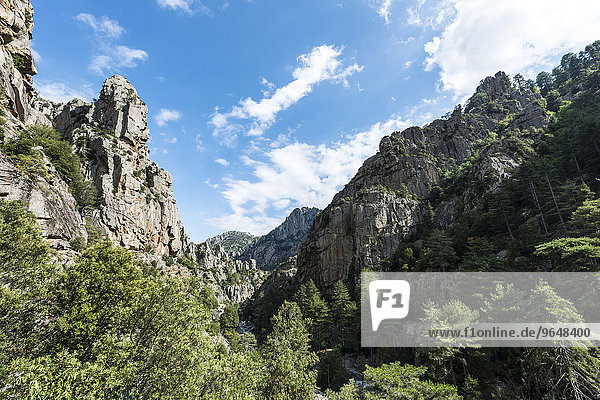 Flussbett und Tal  Fluss Tavignano  Corte  Département Haute-Corse  Korsika  Frankreich  Europa