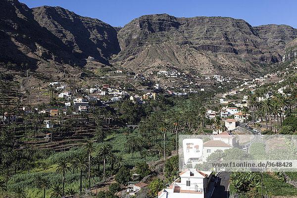 Kanarische Dattelpalmen (Phoenix canariensis)  Terrassenfelder und die Ortschaften im Valle Gran Rey  La Gomera  Kanarische Inseln  Spanien  Europa