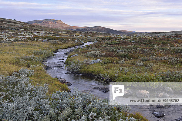 Mountain stream in the fjell landscape in autumn  Ringebufjellet  Norway  Europe