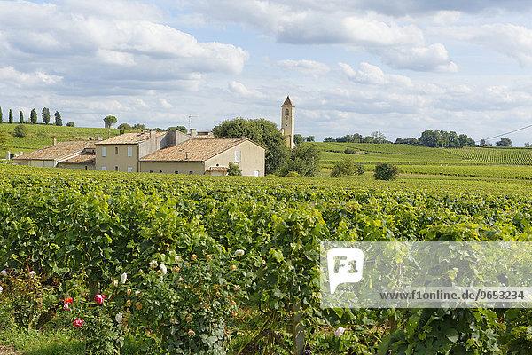 Weingut Mazerat  Saint-Émilion  Département Gironde  Aquitanien  Frankreich  Europa