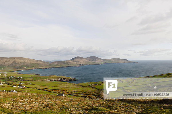 Bucht mit Heckenlandschaft  County Kerry  Irland  Europa