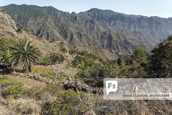 Wanderweg vom Mirador Degollada de Paraza nach La Laja  La Gomera  Kanarische Inseln  Spanien  Europa