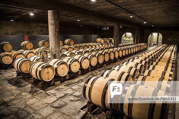 Fässer im Weinkeller vom Weinschloß Genoels Edleren  größtes Weingut in Belgien  Alden Biesen  Flandern  Belgien  Europa