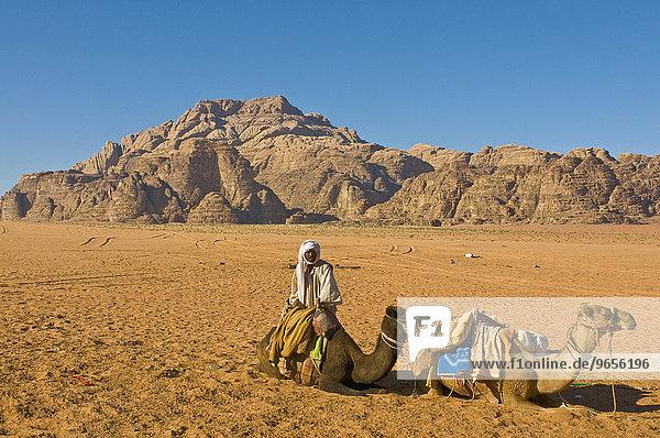 Beduine mit seinen Dromedaren im Wadi Rum  Jordanien  Vorderasien  Asien