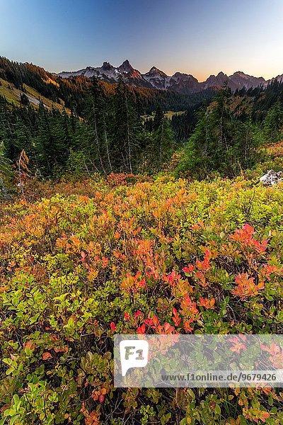 Vereinigte Staaten von Amerika USA Berg Landschaft Wildblume Mount Rainier Nationalpark